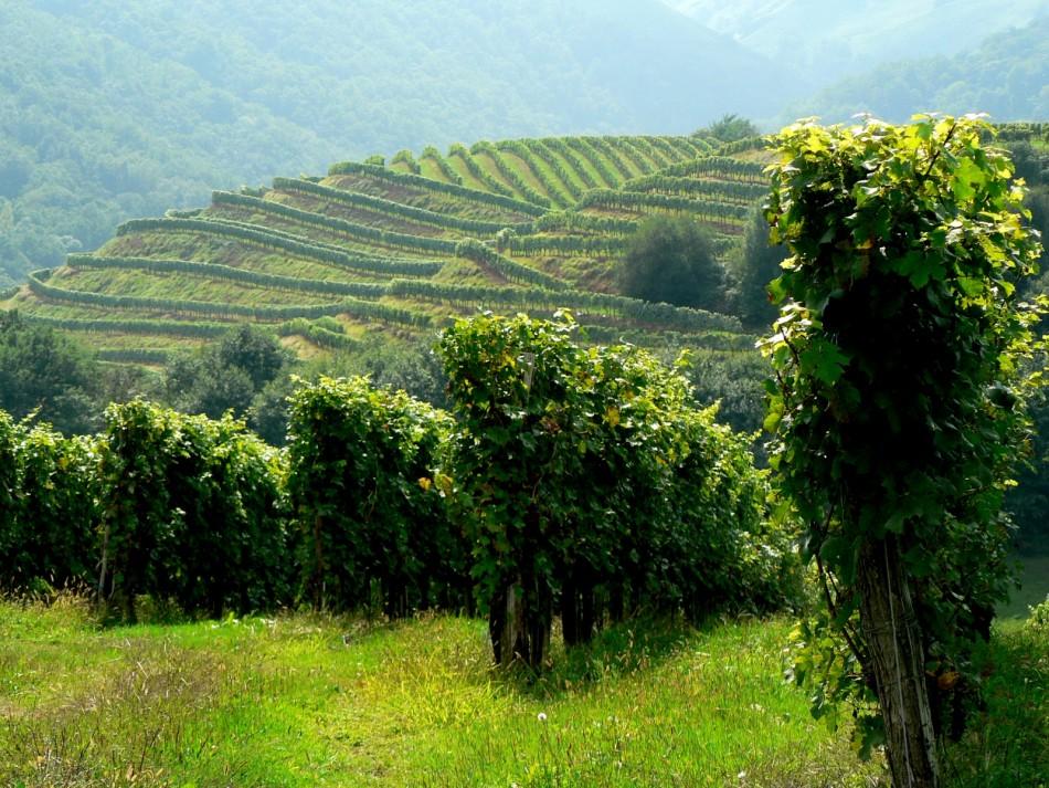 Le vignoble d'Irouléguy, pour des cours d'oenologie